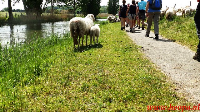 2016-05-11   Rhenen 25 Km (143)