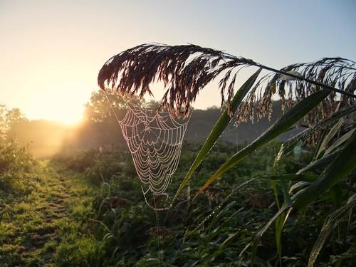 morning autumn sunrise spider drops web cobweb dew