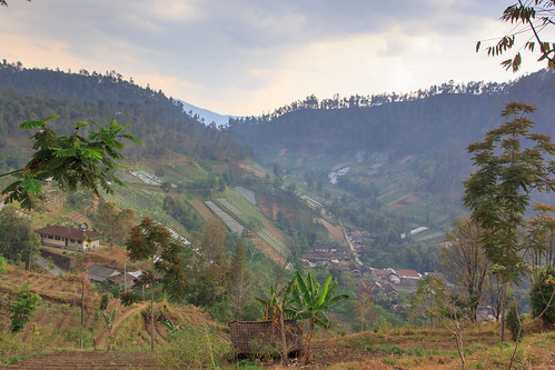 field indonesia java plantation indonesië plantage tawangmangu akker jawatengah ngargoyoso