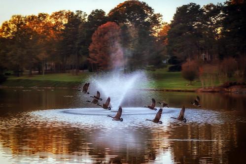 november sunset lake landscape geese flight northcarolina inmybackyard gastonia heatherlock dorameulman