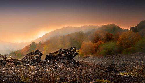 sicily sicilia sizilien sicile autumn autunno herbst etna wald fog nebbia bergen mountains montagne nikond610 samyang85mmf14 nikon