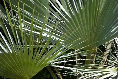 (13) Le Parc du Mugel et son jardin exotique - La Ciotat 33106309206_5fea7011c8