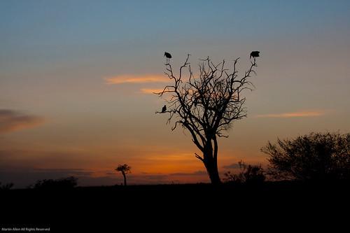 africa kenya safari masaimara nbo narok