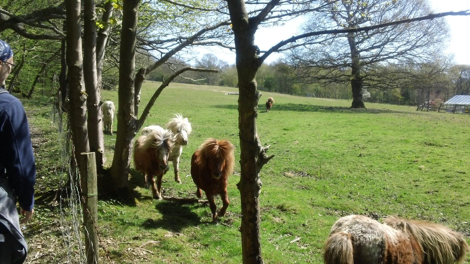 More friendly ponies!