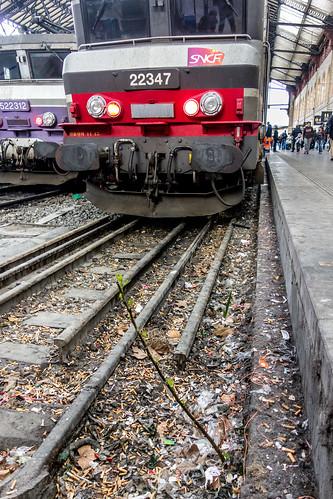 Figuier SNCF Marseille | by Bernard Ddd