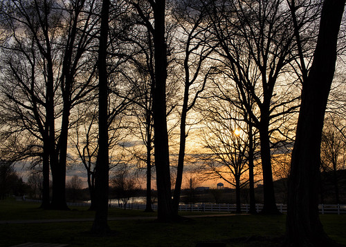 park trees sunset nj carteret