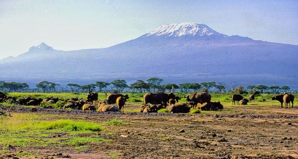 """Image result for kilimanjaro"""""""