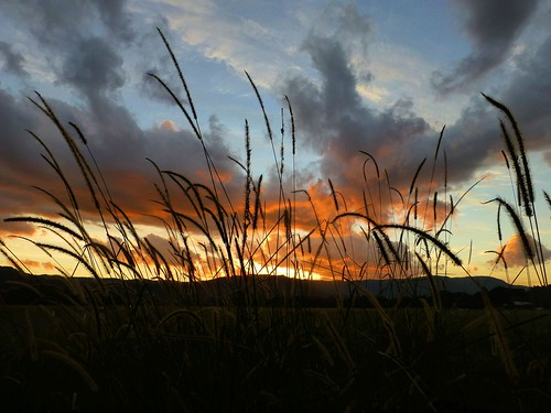sunset grass clouds nsw mullumbimby