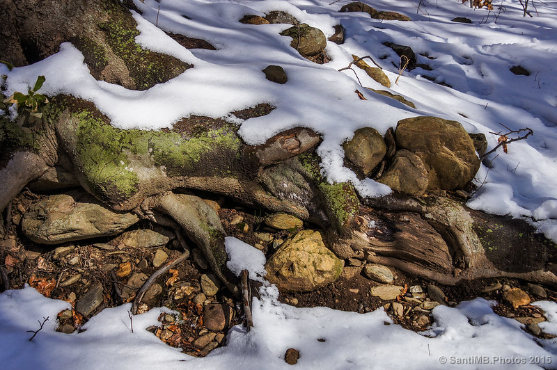 Nieve, raíces y piedras