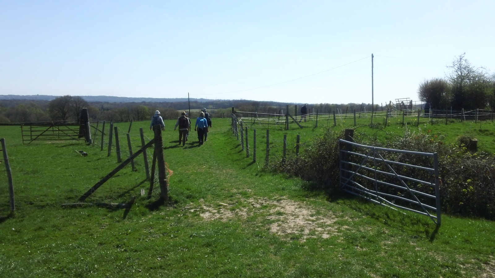 Onwards, southwards through a farm go Saturday Walkers on a mission