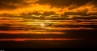 Sun, Clouds and a Seagull | by Matias Negrete Pincetic