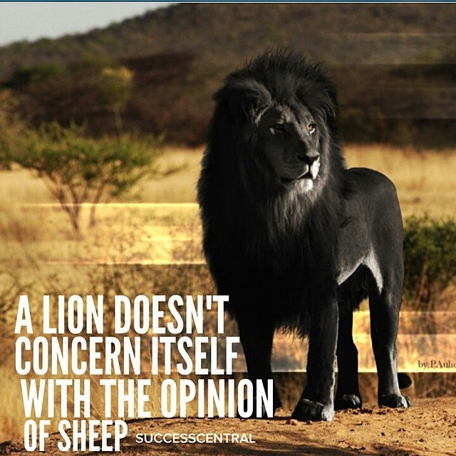 A Lion Doesnt Concern Itself With The Opinion Of Sheep Q Flickr
