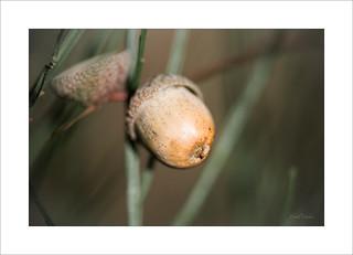 Gland de Scrat | by marmotte758