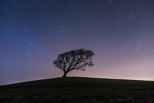 Star trail above the Lone Tree