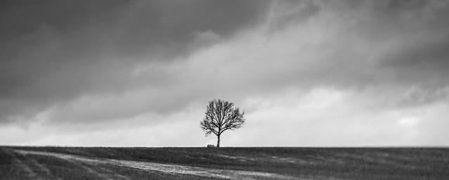 Tree Study 36