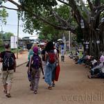 14 Viajefilos en Sri Lanka. Yala 50