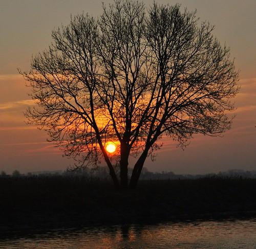 sun holland tree nature sunrise nederland natuur boom amanecer aurora holanda paysbas zon veluwe niederlande zonlicht gelderland hattem salidadelsol zonsopkomst leverdusoleil ochtendstond solopgang ochtendzon breakingdawn tagesanbruch nikond90 ochtengloren wilmahw61 wilmawesterhoud
