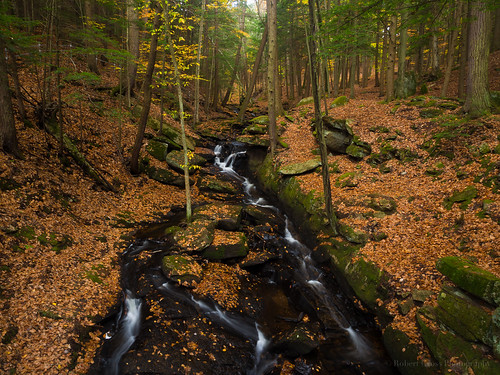 longexposure autumn trees fall leaves creek forest landscape waterfall woods newengland newhampshire olympus foliage keene omd chesterfieldgorge em5
