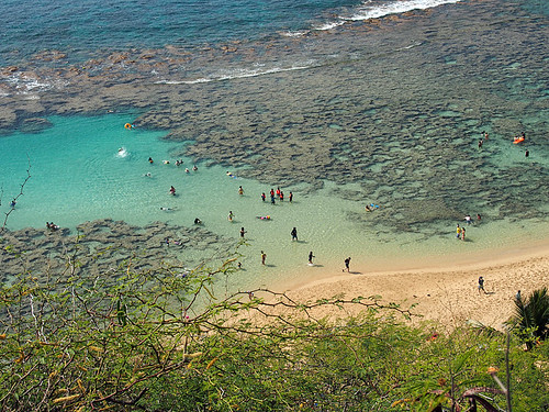 Waikiki Trolly- Hanauma Bay -Joe 1 | by KathyCat102