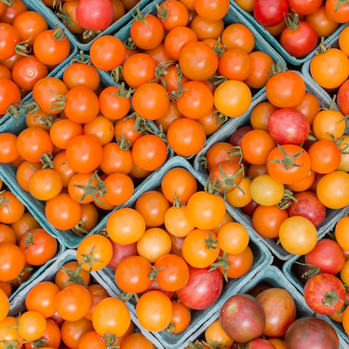Tomatoes! [217/366] | by timsackton