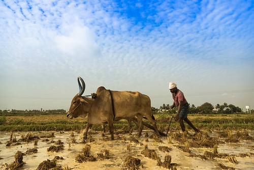 """You cannot plough a field by turning it over in your mind"" 