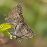 Mi, 13.05.15 - 13:56 - Schmetterlingsporno
