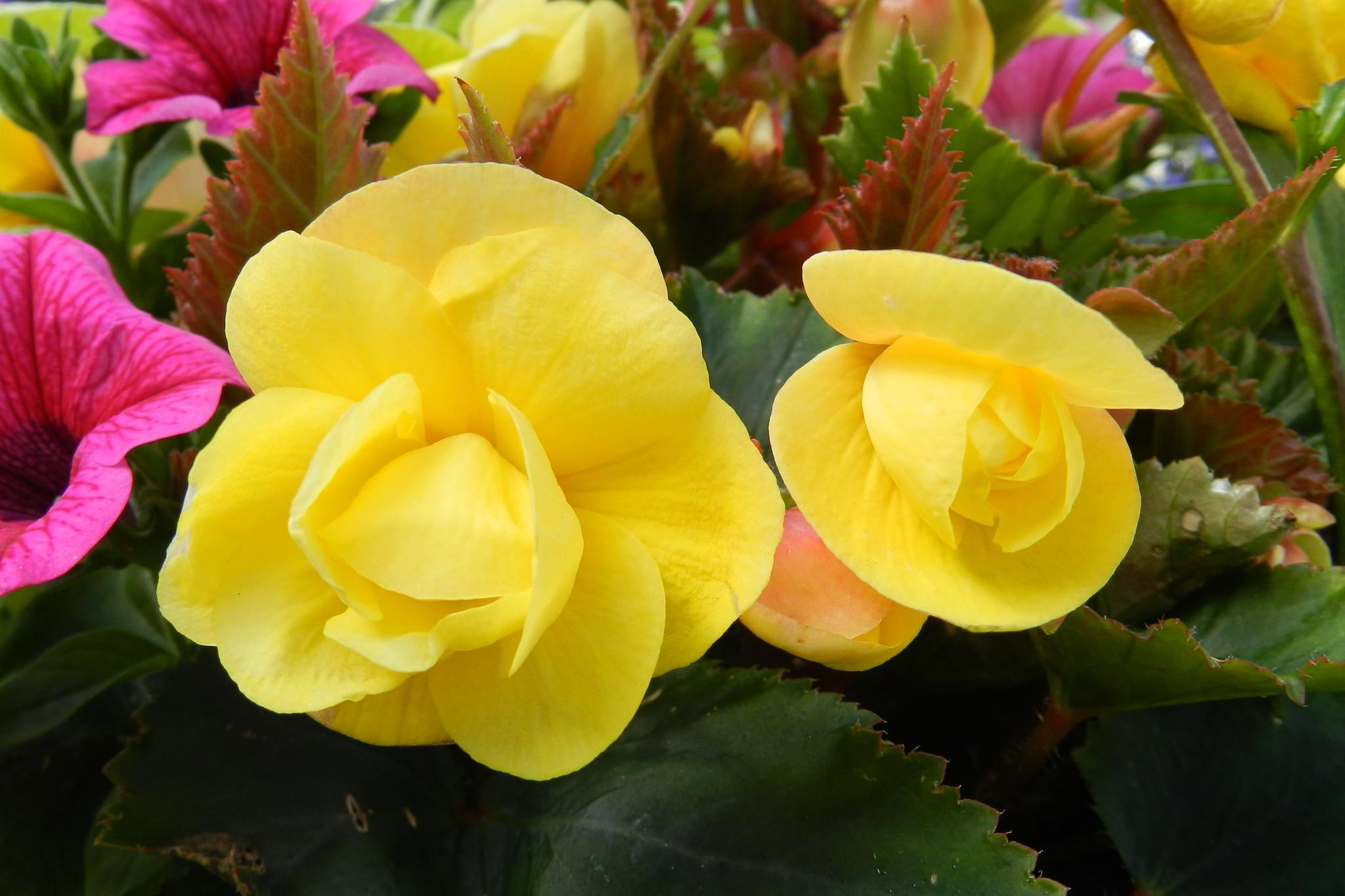 Flores Irlanda del Norte