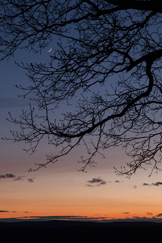 sunset moon color tree newengland crescent explore harvardma canon5dmarkii