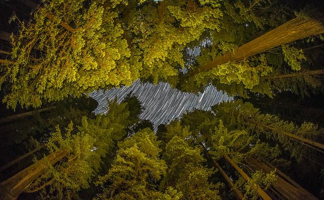 star trails redwoodslrps-2
