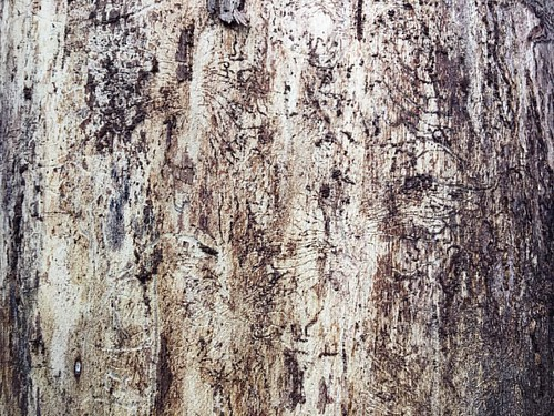 Can you guess what it is? I love to take pictures of textures and patterns.. Not only that they look great for themselves but the are great as backdrops for portraits as well. #trunk #tree #pattern #texture #structure #abstract #background #backdrop | by MRFotografie