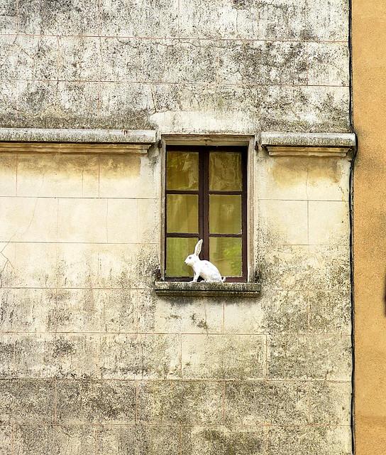 White Rabbit, Aups, Var, Provence, France