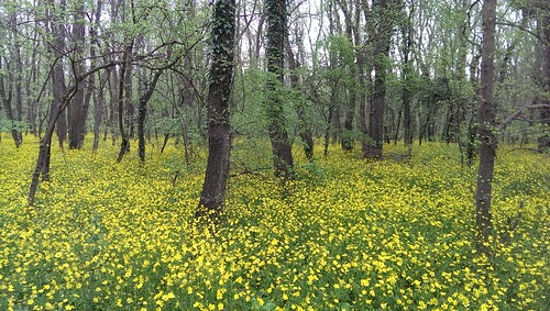 Baltata woodland, Bulgaria, 29th April 2015