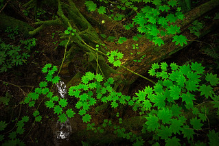 forest floor III | by sebboh