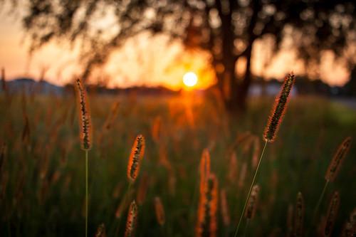 light sun sunlight tree field sunrise us unitedstates wheat kansas wichita 500px