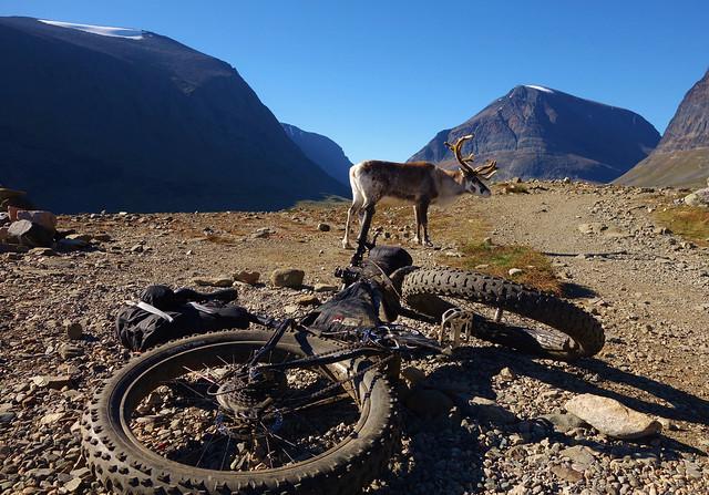 Reindeer meets fatbike :)