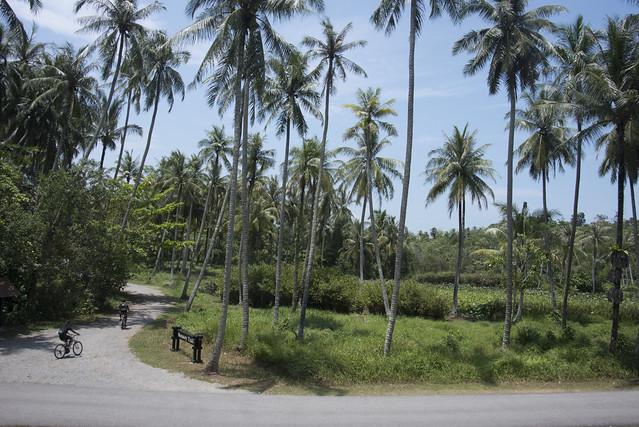 Sensory Trail Ponds, Pulau Ubin
