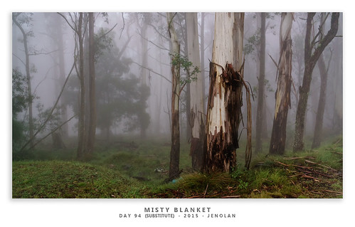 trees fog landscape sony country australia nsw newsouthwales subject jenolan 2015 landscapephotography 365project nex6 sonynex6 jasonbruth 3652015 1670mmf4ossziess 365project2015 365201594substitute