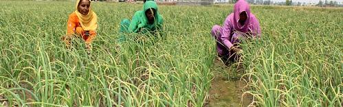 Women working, Haryana | by CGIAR Climate