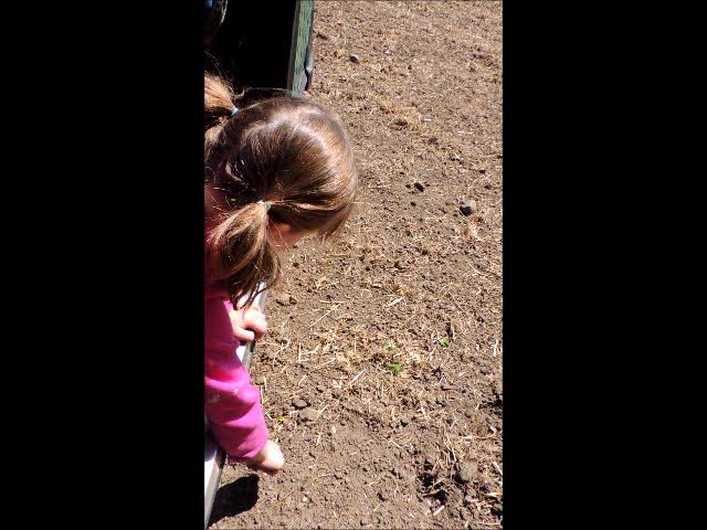 Clara picks rocks