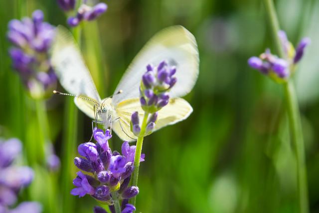 Landing Butterfly