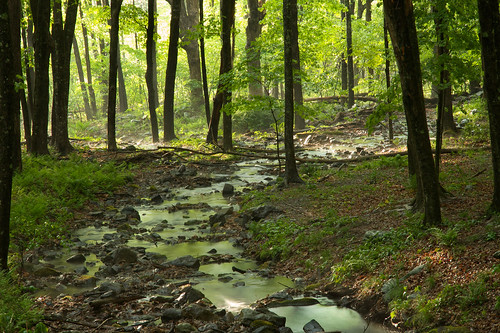 mist green nature sunshine rain weather creek forest landscape spring woods stream glow may