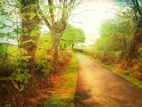 wales countrylane uk silian ceredigion