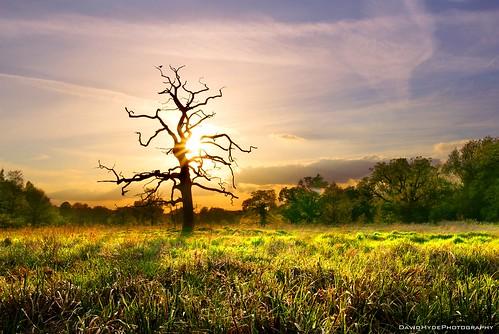 park sunset sun house tree grass silhouette clouds landscape dead dusk sony meadow lensflare end marsh alpha essex saffronwalden audley a700 tamron1750 randomnonsense bydavehydephotography
