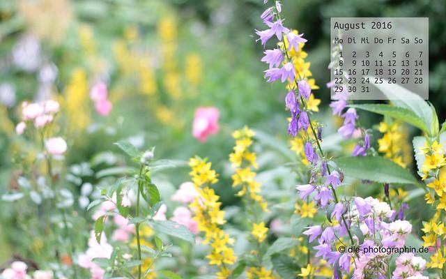 sommerblumen_august_kalender_die-photographin