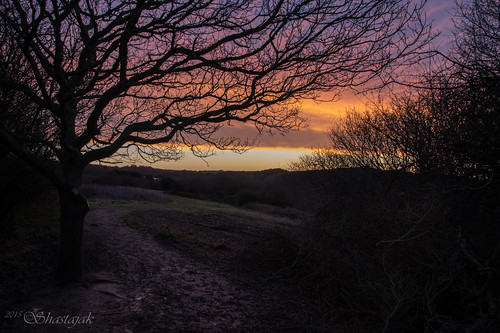 tree silhouette sunrise dawn sunup daybreak hastingscountrypark ecclesbourneglen rocklandsmeadow