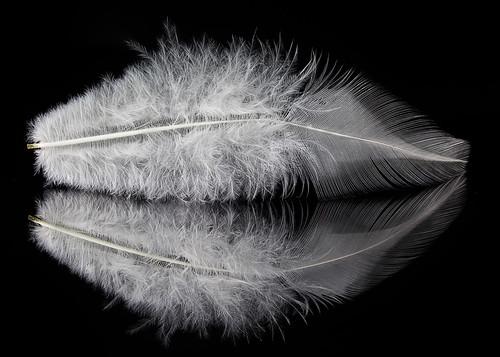 White Feather: Protection | by KellarW