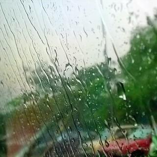 晨雨(二). Morning Rain (2). #rain #morning #morningrain #raining ☔