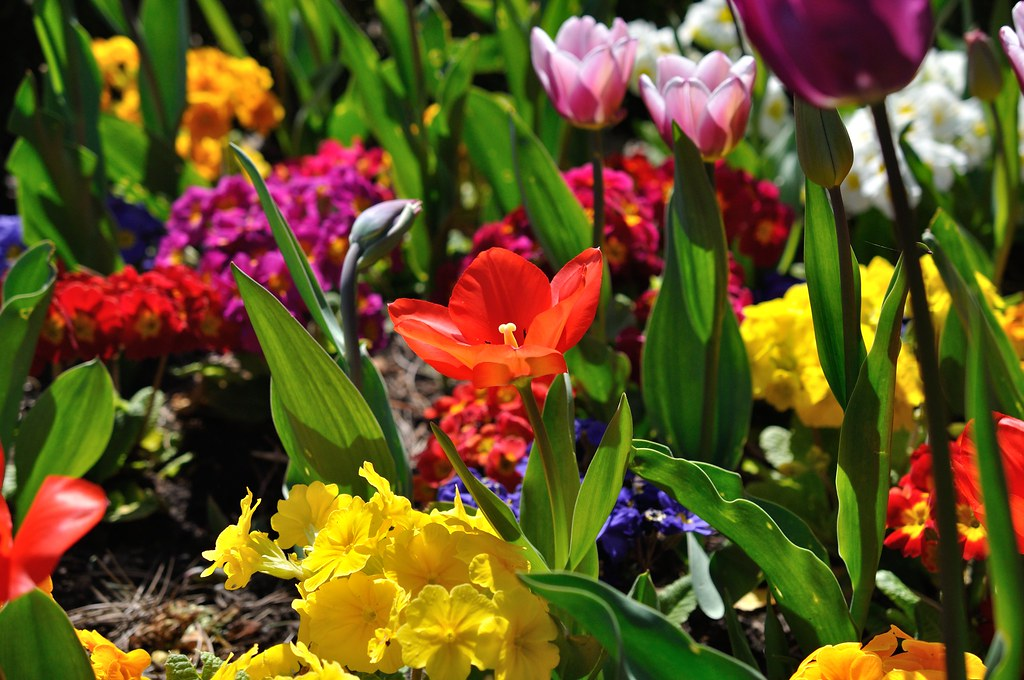 University of Leicester Botanic Garden: a world of plants