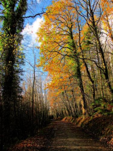 wood autumn trees ireland irish colour nature clouds woodland outdoors countryside scenery path cork scenic bluesky newmarket hss islandwood canong11 topazglow