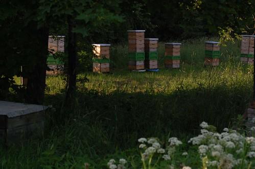 Mesilastarud